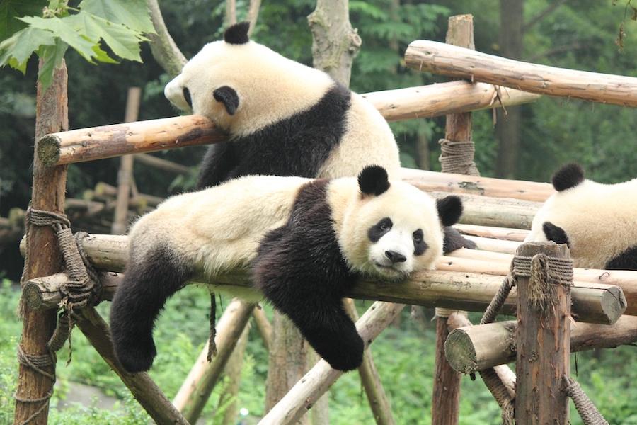 パンダの日は大切