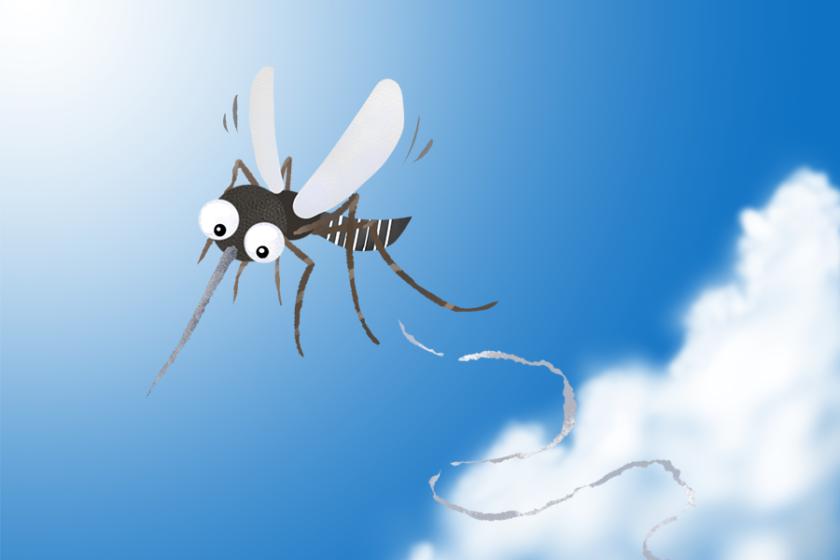夏にブ~ンと嫌な奴『蚊の日』が8月20日にあるって本当? 由来とは?