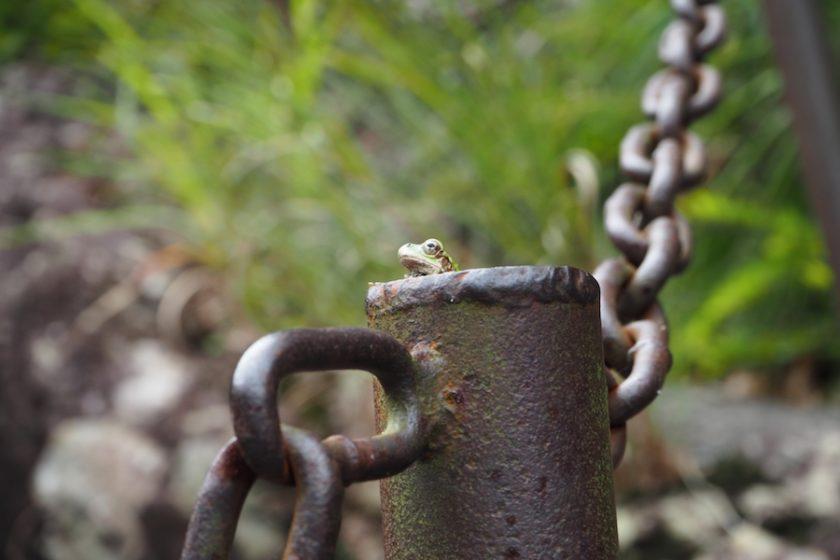 『井の中の蛙』には続きがあった! 世界のすごいカエルも合わせてご紹介♪