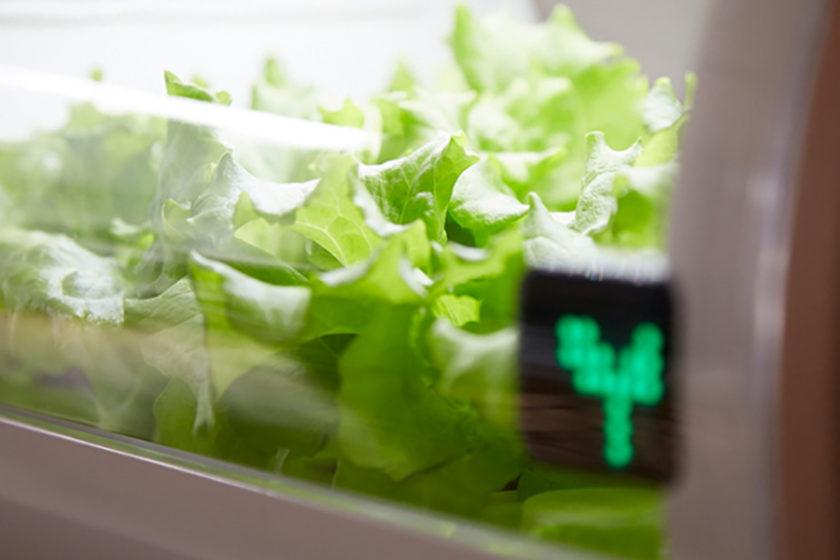 スマートでスタイリッシュな個人農園 アドトロンテクノロジーの「foop」