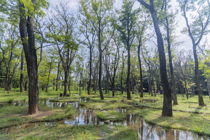 「自然」と「建築」の間にある、幻想的な空間 《水庭》。