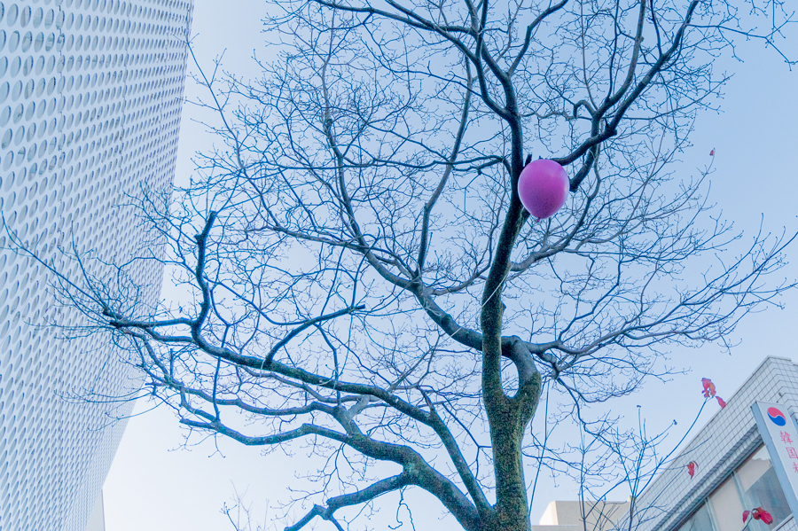 街路樹に風船が引っかかっていると思ったら… ≪ちいさなおとしもの≫ / 山極満博 photo by ぷらいまり