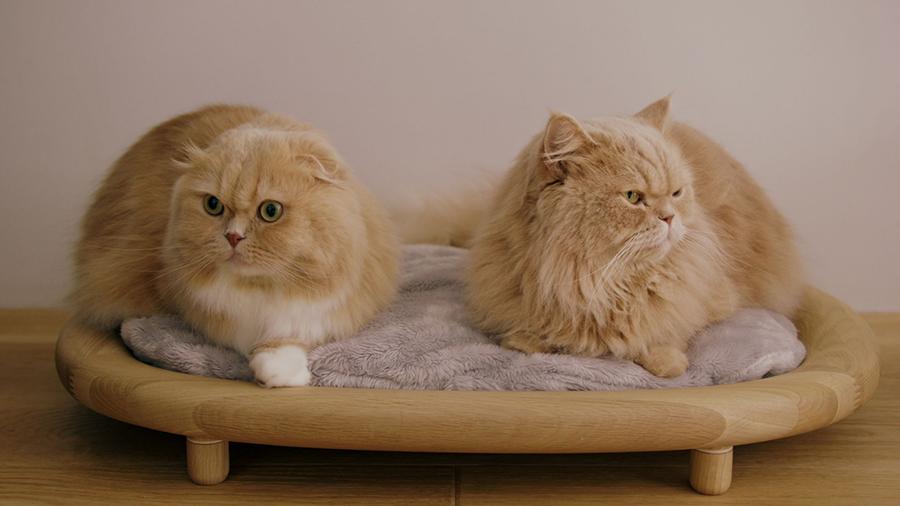 KARIMOKU CAT(カリモクキャット)
