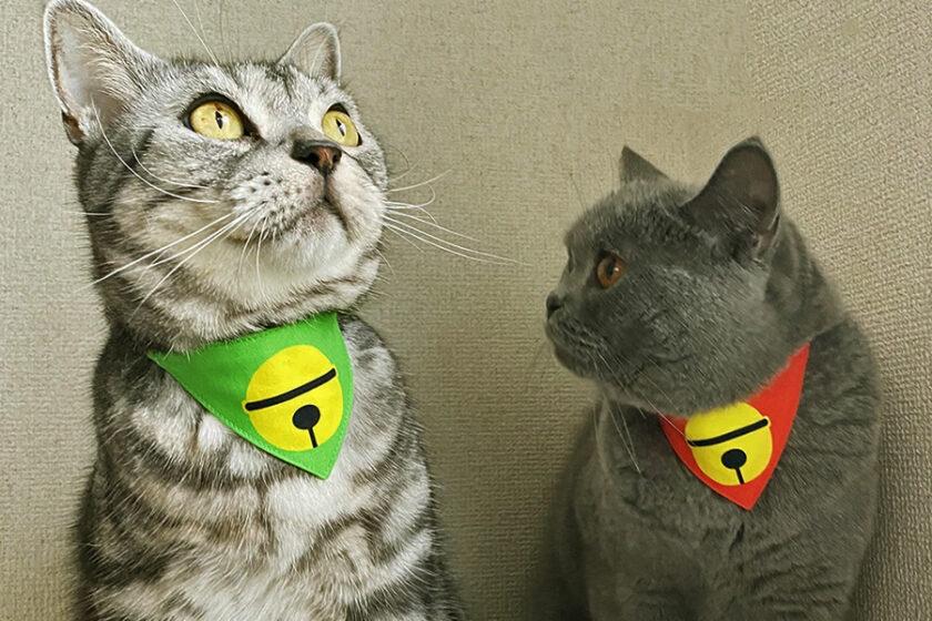 """すべては猫様のためだけに!おしゃれだけど伊達じゃない、ガチの実用品。""""まじめな首輪""""専門店「ネコソダテ」"""