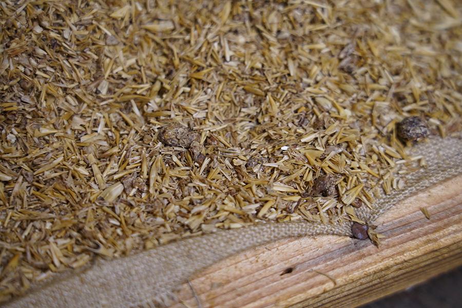 乾燥させた後の穀物の搾りかす。色が浅いのが麦芽で、濃い目なのが食パンの耳(画像提供:©️酉鬼啤酒 Ugly Half Beer)