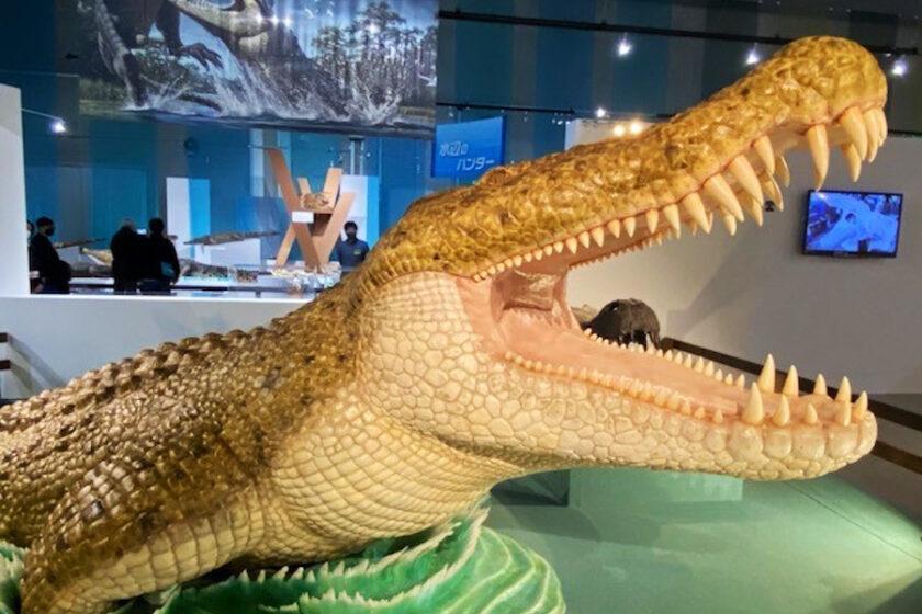 恐竜もぐるっと360°回して観察?! オンラインで国立科学博物館をもっと楽しもう。