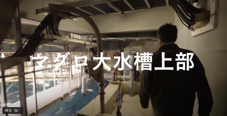 とっておきトーク(葛西臨海水族園)