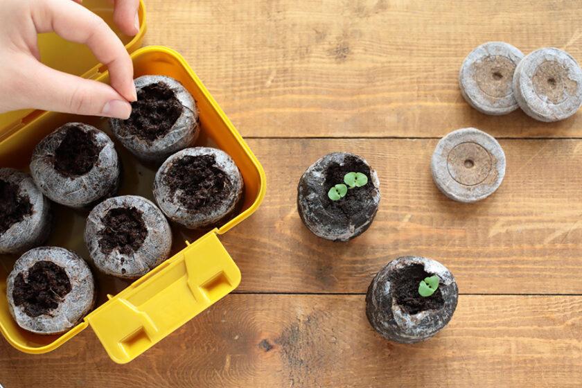 誰でも!簡単に!タネのプロが生み出した、お家の中でタネから育てられる「Seedfun.」が便利すぎる!