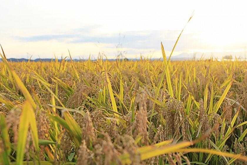 環境負荷とフードロス削減にも貢献できる、お米由来のプラスチック「ライスレジン」って何?